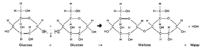 Dehydration Synthesis and HydrolysisHydrolysis Synthesis
